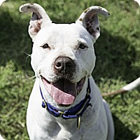 Adopt A Pet :: Cody - Aubrey, TX