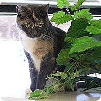 Adopt A Pet :: Tosha - Jupiter, FL