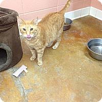 Adopt A Pet :: Vern - Lake Charles, LA