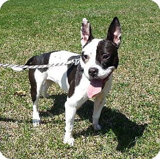 Dog Adoption Birmingham Mi