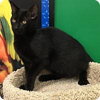 Adopt A Pet :: Kenya - Ortonville, MI