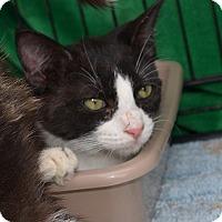 Adopt A Pet :: larry - Scottsdale, AZ