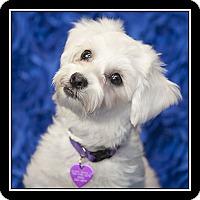 Adopt A Pet :: Connie - San Diego, CA