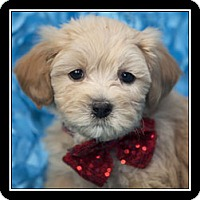 Adopt A Pet :: Ariel - San Diego, CA