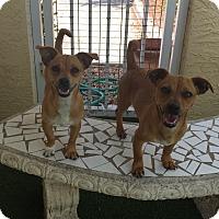 Adopt A Pet :: Faith and Finn - Ft. Lauderdale, FL