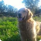 Adopt A Pet :: Hailey