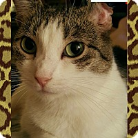 Adopt A Pet :: Erin - Encino, CA
