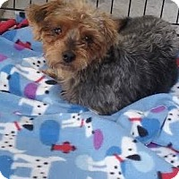 Adopt A Pet :: Poppy - San Fernando Valley, CA