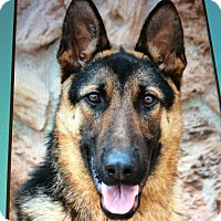 Adopt A Pet :: ARROW VON ALZEY - Los Angeles, CA