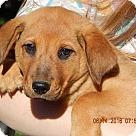 Adopt A Pet :: Hank (12 lb)