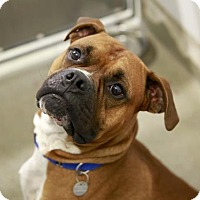 Adopt A Pet :: Chuckles - Kettering, OH