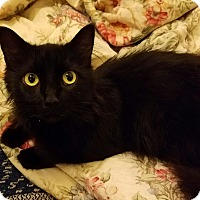 Adopt A Pet :: Onyx - Cleveland, OH