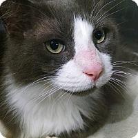 Adopt A Pet :: Fu Man Chu - Fredericksburg, VA