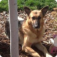 Adopt A Pet :: Hope - Littleton, CO