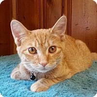 Adopt A Pet :: Puma - Jeannette, PA