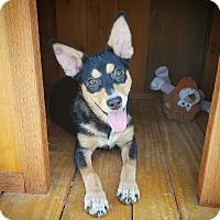 Adopt A Pet :: Tinker Bell - Fredericksburg, TX