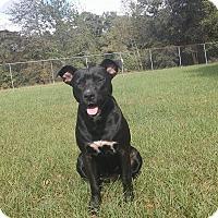 Adopt A Pet :: Stormie - Matawan, NJ