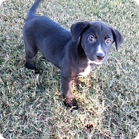 Adopt A Pet :: Tippy Toe - Trenton, NJ