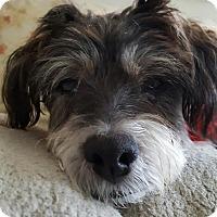 Adopt A Pet :: William - Santa Monica, CA