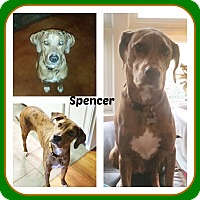 Adopt A Pet :: SPENCER - Malvern, AR