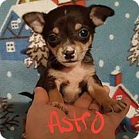 Adopt A Pet :: Astro - Niagra Falls, NY