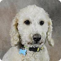 Adopt A Pet :: Luke - St. Louis Park, MN