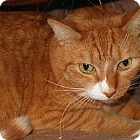 Adopt A Pet :: Phineas - Wake Forest, NC
