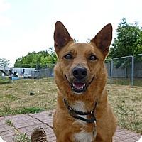 Adopt A Pet :: Pensacola - Grayslake, IL