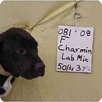 Adopt A Pet :: Charmin/Pending - Zanesville, OH