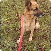 Adopt A Pet :: Tyson - Hilliard, OH