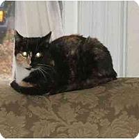 Adopt A Pet :: Cali - Little Falls, NJ