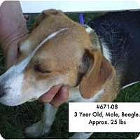 Adopt A Pet :: I.D. # 671-08 - RESCUED! - Zanesville, OH