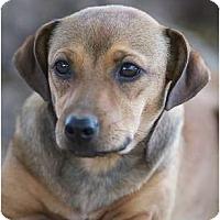 Adopt A Pet :: Ginger - Providence, RI