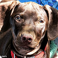 Adopt A Pet :: Jimmy - North Hollywood, CA