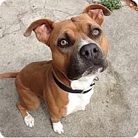 Adopt A Pet :: Hero - San Francisco, CA