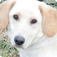 Adopt A Pet :: MISS DORA(ADORES HER FAMILY) - Wakefield, RI