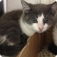 Adopt A Pet :: Pipsqueak - East Brunswick, NJ