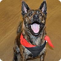 Adopt A Pet :: Kane - Summerville, SC