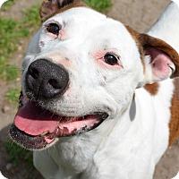 Adopt A Pet :: Sarafina - Ridgeland, SC