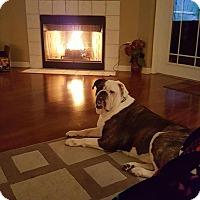 Adopt A Pet :: Dyna - Windermere, FL