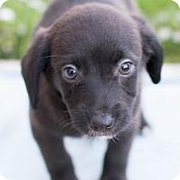 Adopt A Pet :: Thumper - Modesto, CA