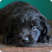 Adopt A Pet :: Rodney - Waldorf, MD