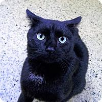 Adopt A Pet :: Jasper - Toledo, OH