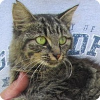 Adopt A Pet :: Faye - Germantown, MD