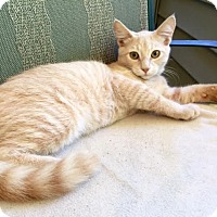 Adopt A Pet :: ATLAS - Burlington, NC