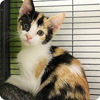 Adopt A Pet :: Mina - Sarasota, FL