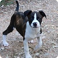 Adopt A Pet :: Muncie - Saratoga, NY