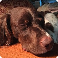 Adopt A Pet :: AR/Grady - Normal, IL