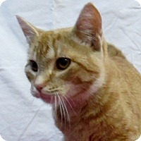 Adopt A Pet :: Surly - Lloydminster, AB