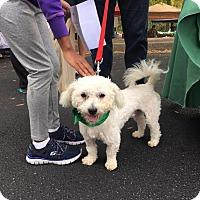 Adopt A Pet :: Chico - Alpharetta, GA